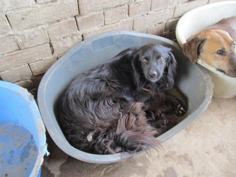 DECHKO II, M-X épagneul, né 2014, 13 kg - Sympa (BELLA) Pris en charge Ferme des Rescapés - Page 5 08_20113