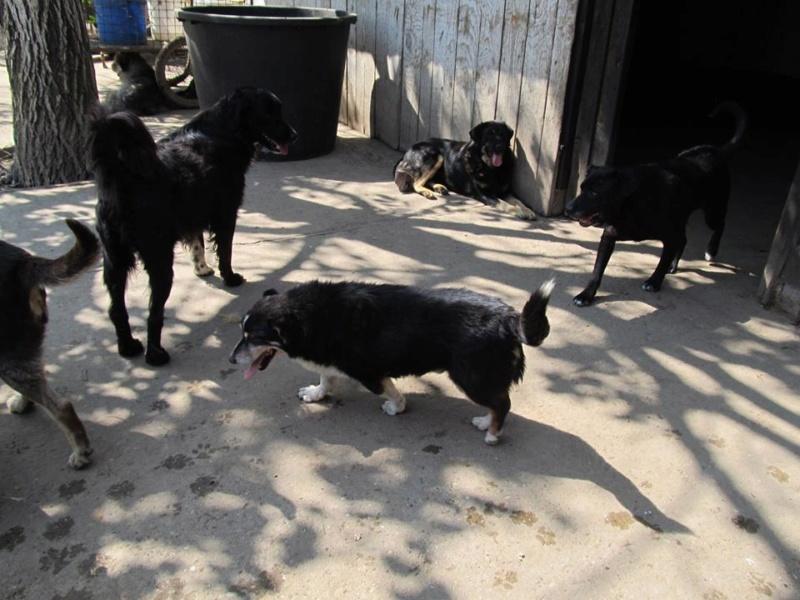 SHARENKO, M-X, né 2005, 13kg (BELLA) Pris en charge Refuge Pas Si Bêtes - Page 2 08_20188