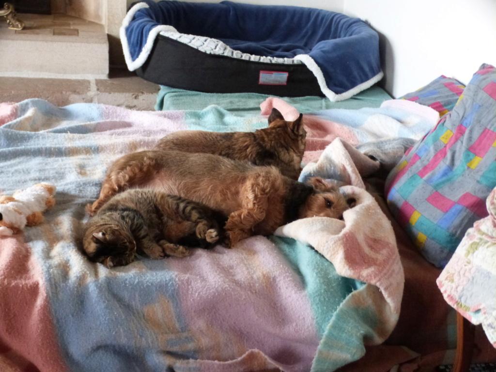 SHANA - chat femelle aveugle, née en fin 2016 - EN FA A PASCANI - Adoptée par Nanette 71 (71) - Page 2 P1040810