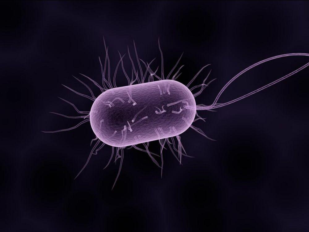 Une bactérie dans l'espace  Bactzo10