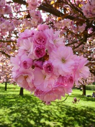 Pour semer des fleurs dans le coeur ... - Page 3 5863a310