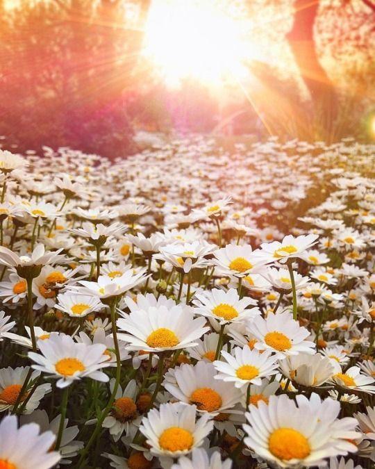 Pour semer des fleurs dans le coeur ... - Page 3 9e2a7610