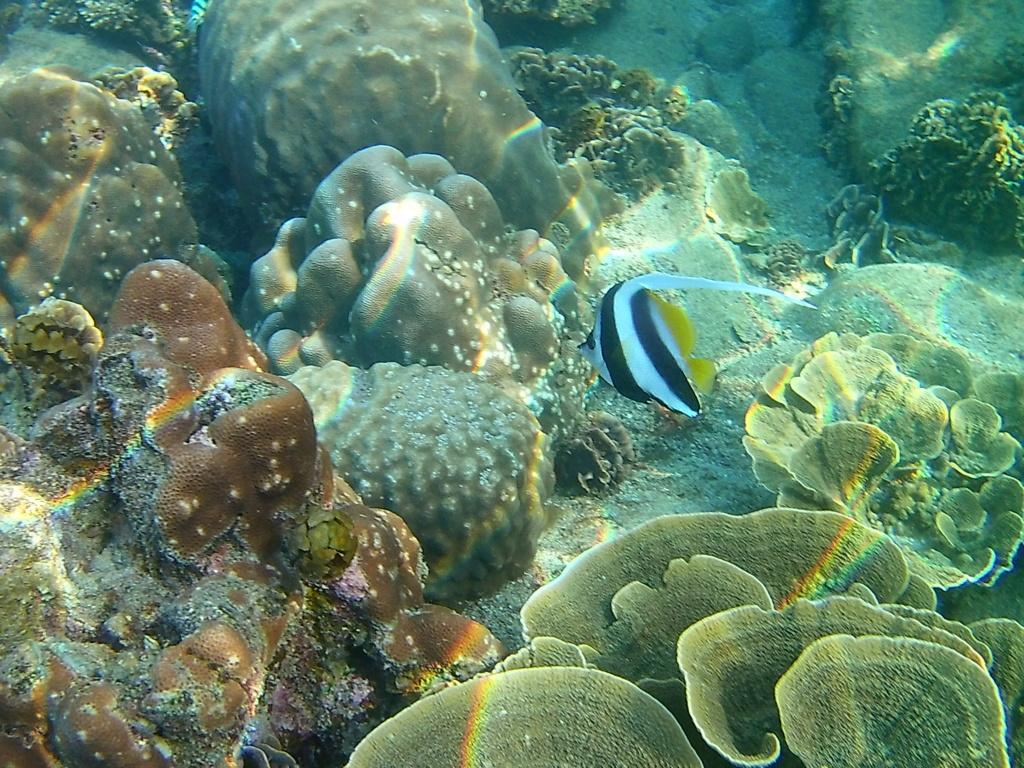 Les fonds sous marins de l'ïle de la Réunion... 20000619