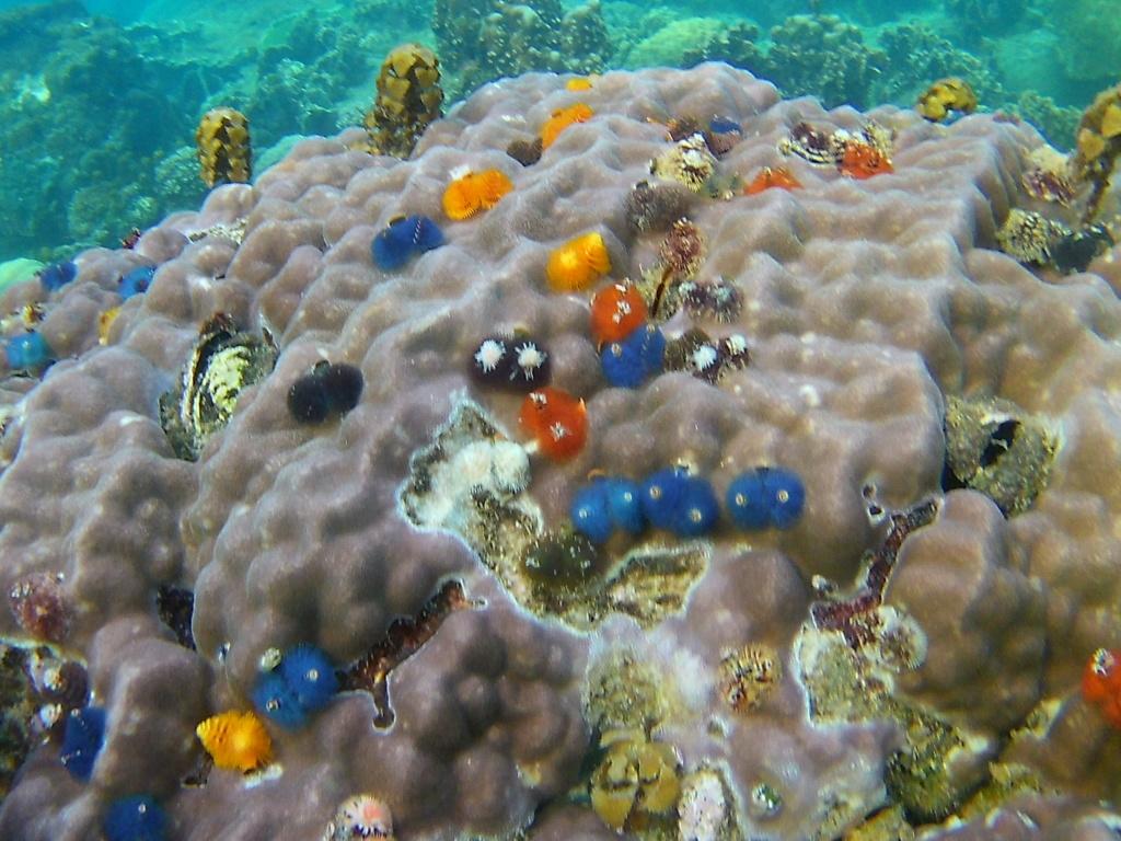 Les fonds sous marins de l'ïle de la Réunion... 20000620