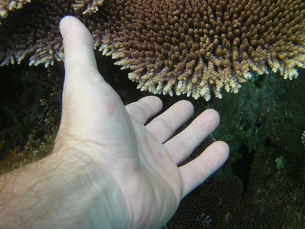 Les fonds sous marins de l'ïle de la Réunion... 20000621