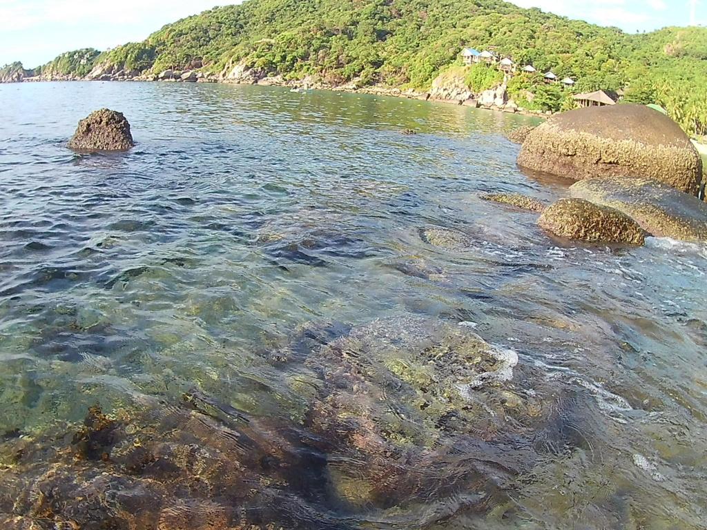Les fonds sous marins de l'ïle de la Réunion... 20000622