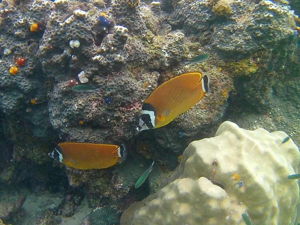 Les fonds sous marins de l'ïle de la Réunion... 20170622