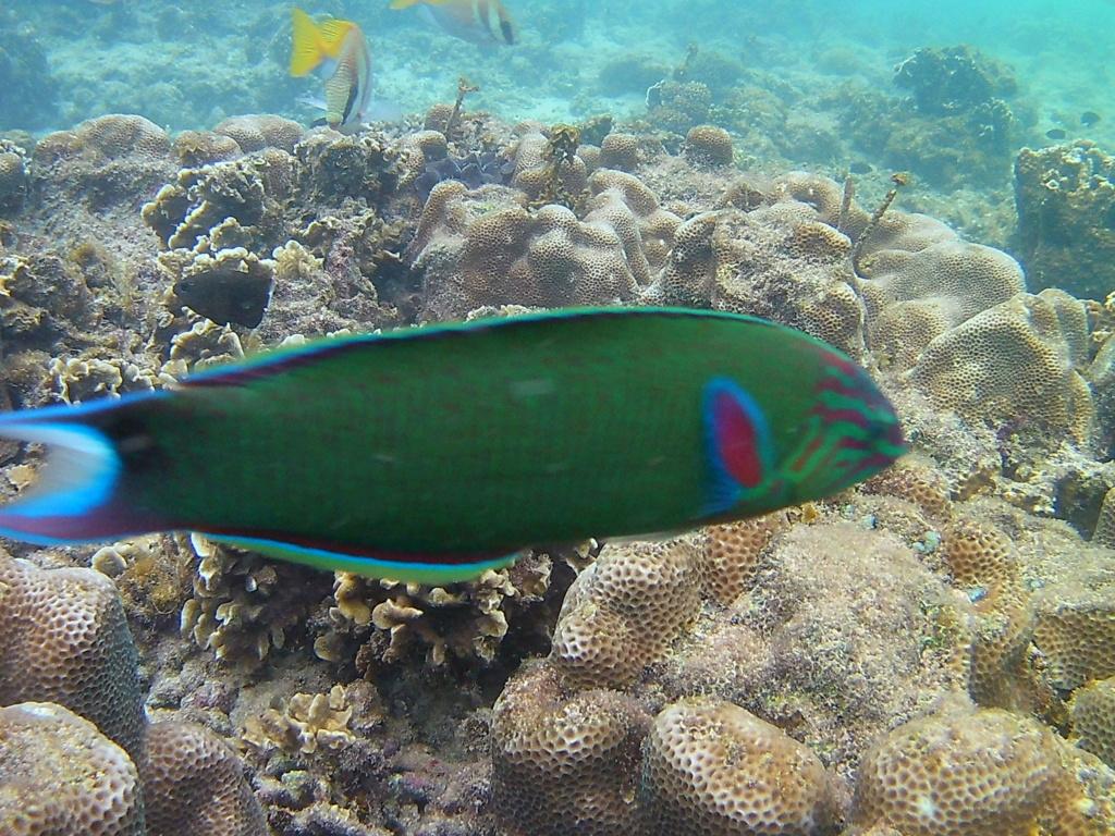 Les fonds sous marins de l'ïle de la Réunion... 20170624