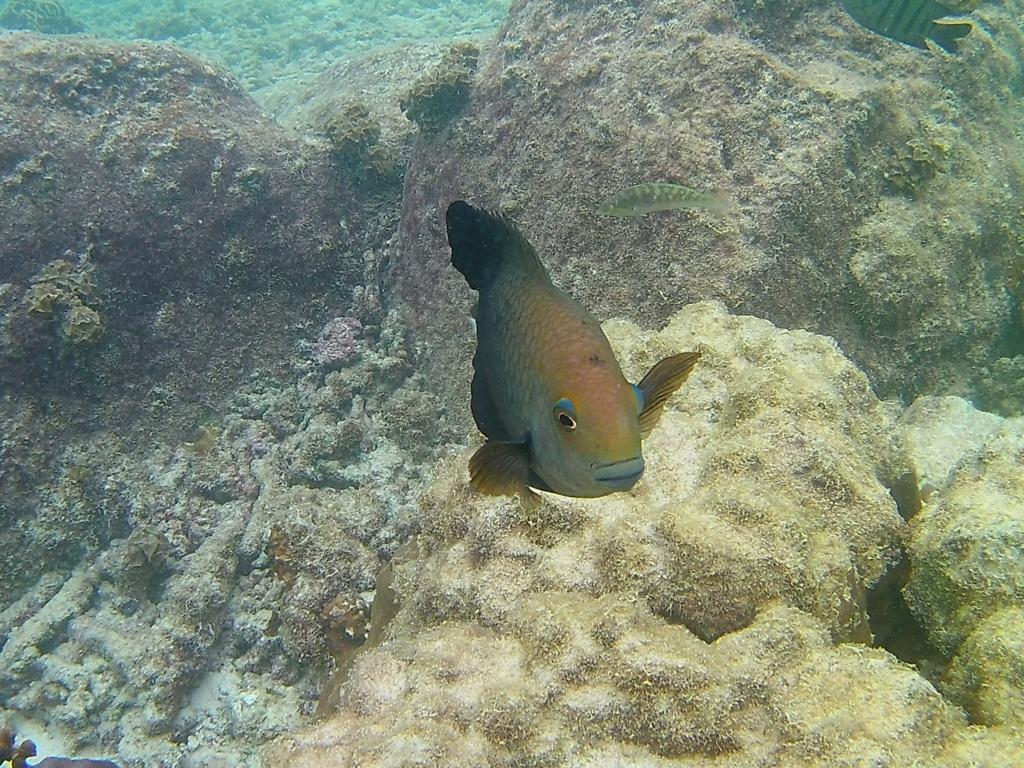 Les fonds sous marins de l'ïle de la Réunion... 20180920