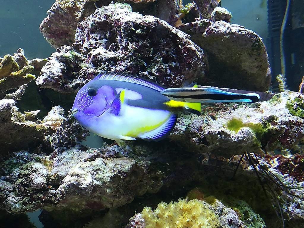 photos de poissons et coraux  - Page 4 Img_2062