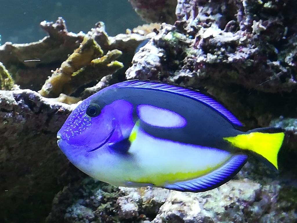 photos de poissons et coraux  - Page 4 Img_2063