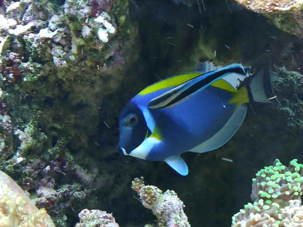 photos de poissons et coraux  - Page 4 Img_2064