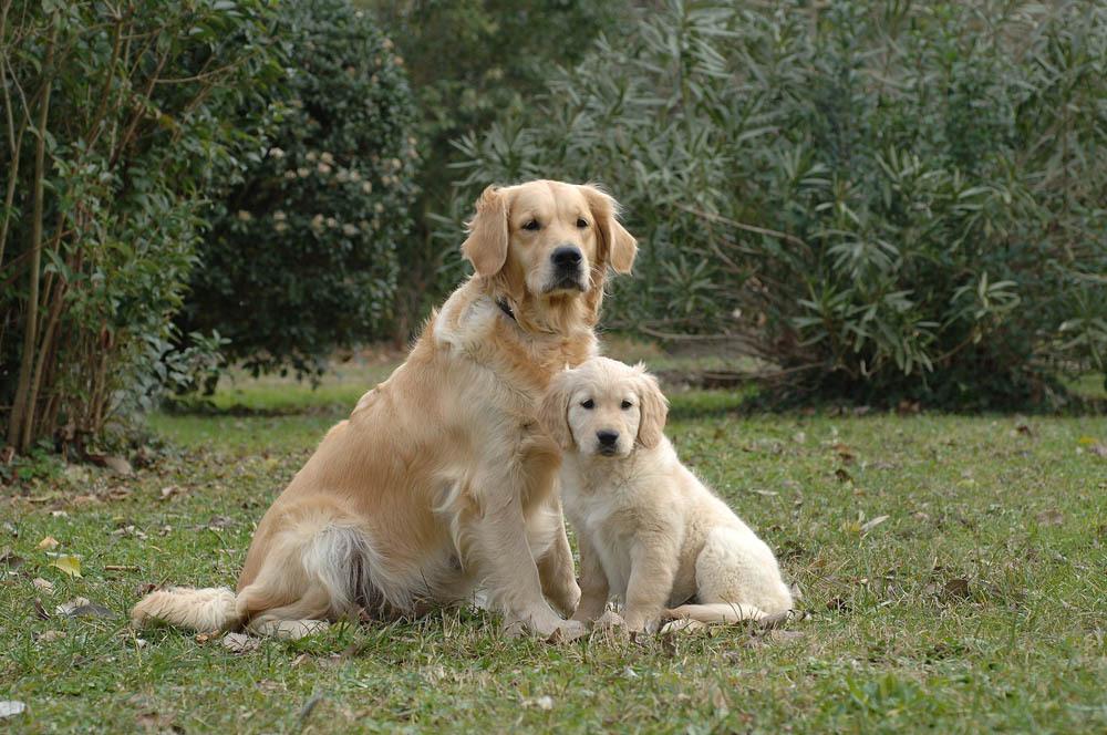 Des connaisseurs en chiens ?  - Page 5 3-307710