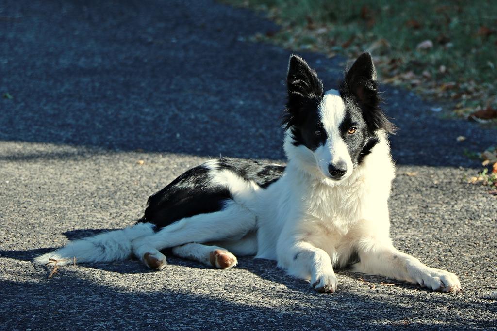 Des connaisseurs en chiens ?  - Page 6 Img_4312