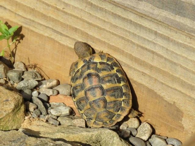 Enclos pour mes petites tortues Img_1016
