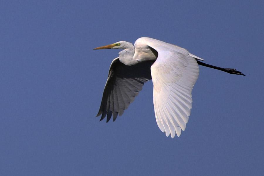 Fórum Aves - Birdwatching em Portugal - Portal Img_0311