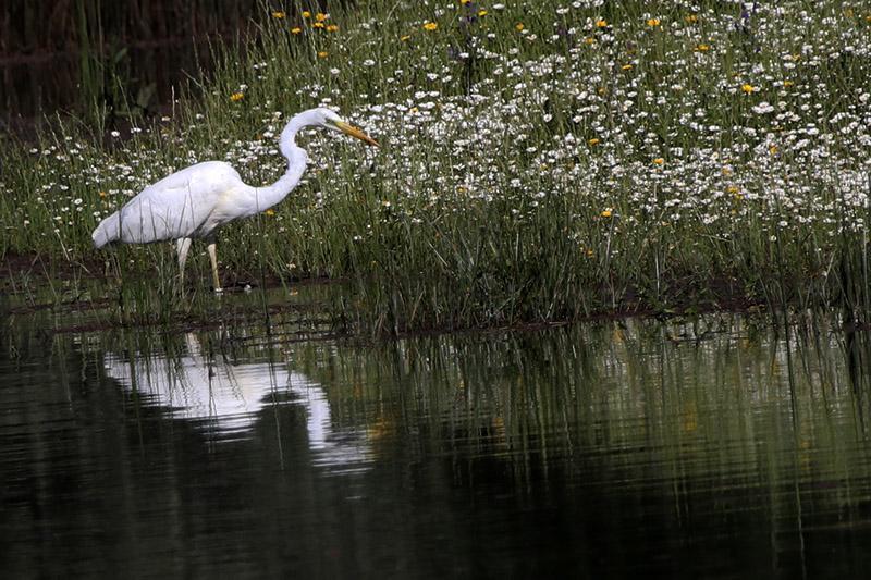 Fórum Aves - Birdwatching em Portugal - Portal Img_0312