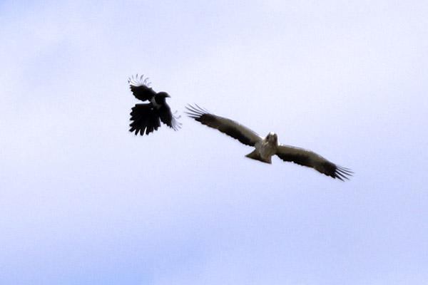 Fórum Aves - Birdwatching em Portugal - Portal Img_0612