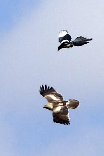 Fórum Aves - Birdwatching em Portugal - Portal Img_0613