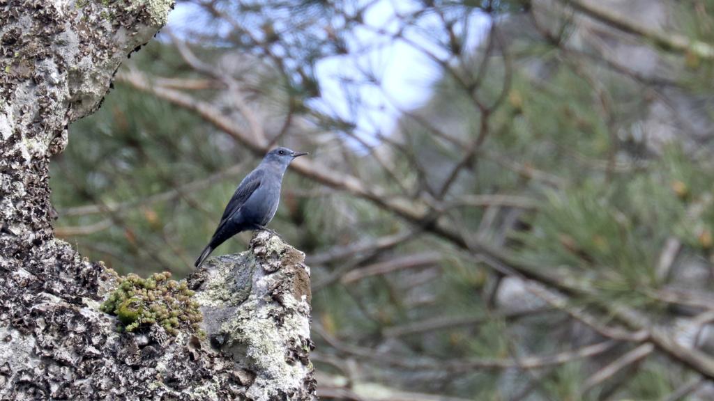 Fórum Aves - Birdwatching em Portugal - Portal Img_0620
