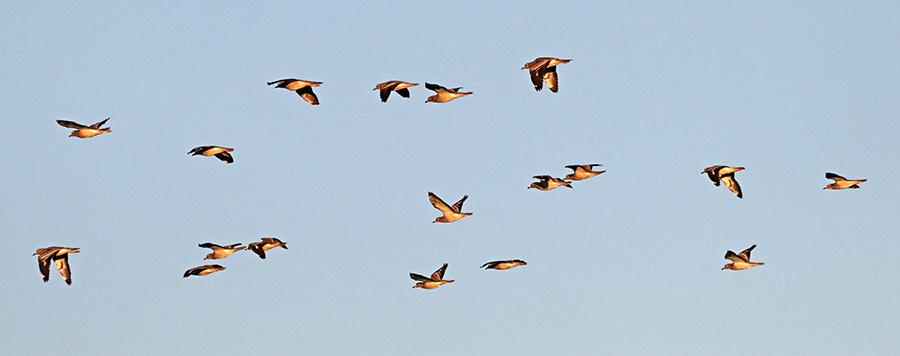 Fórum Aves - Birdwatching em Portugal - Portal Img_0813