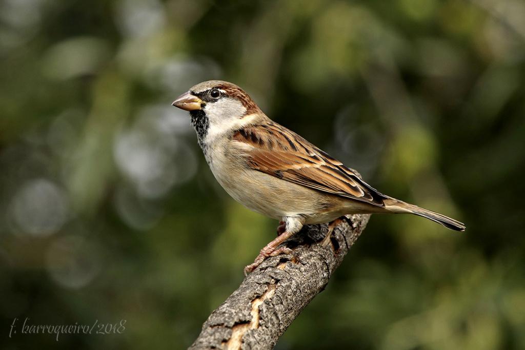 Aves do Quintal Img_1810