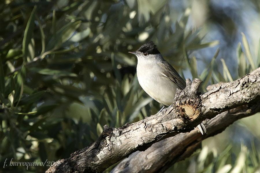 Aves do Quintal Img_2612