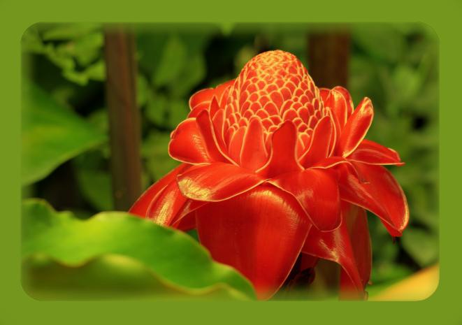 Красный жасмин. Aao_a10