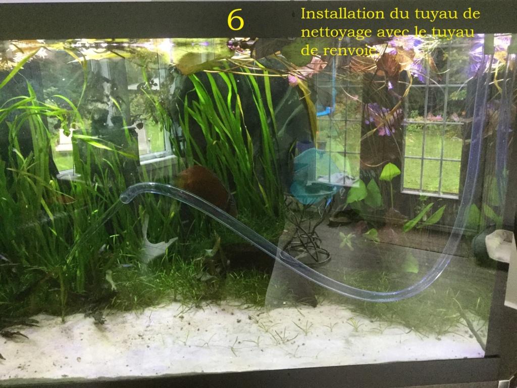 Nettoyage du sable sur fond de l'aquarium par Jee. Img_2318