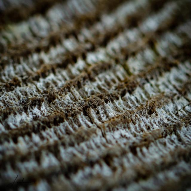 Concours 01/19: Texture Textur12