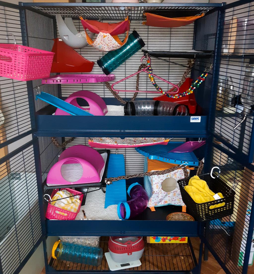 Photos de vos cages - Page 12 Psx_2127