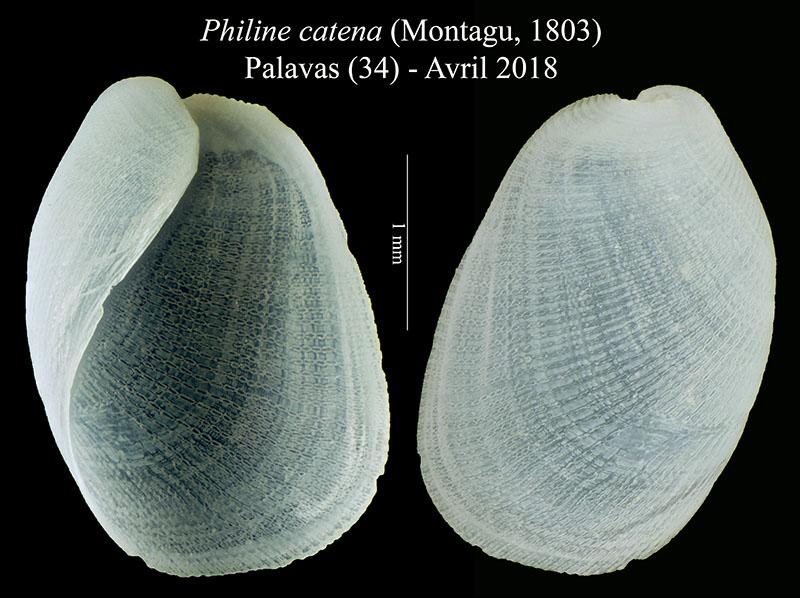 philin10.jpg