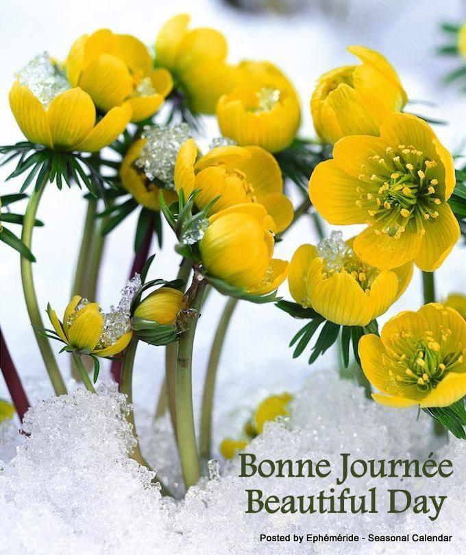 Bonjour ~ Bonsoir  - Page 3 25_jan10