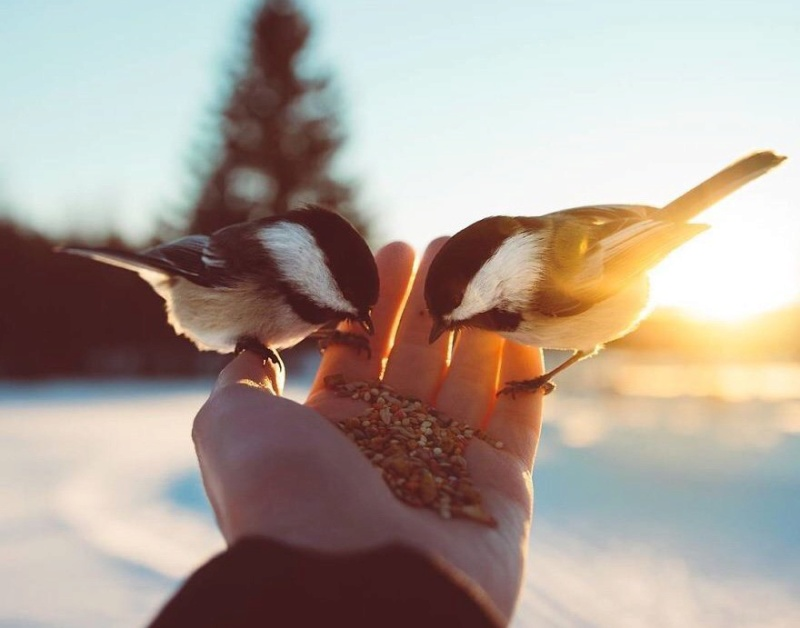 Les oiseaux du monde * - Page 5 Doqty-10