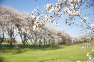 Souriez,c'est le printemps! Korea-10