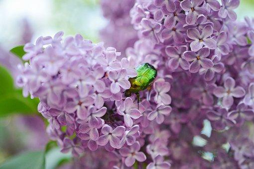 Bonjour ~ Bonsoir  - Page 4 Lilac-10
