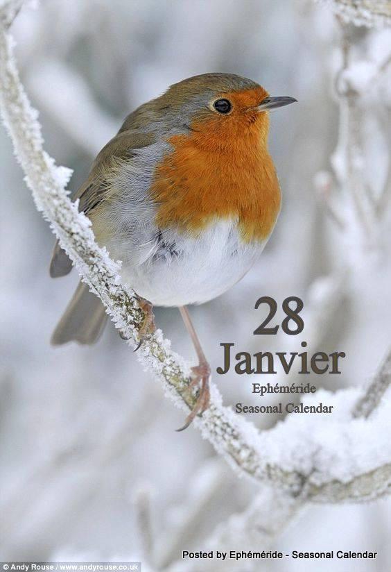 Bonjour ~ Bonsoir  - Page 4 Oiseau10