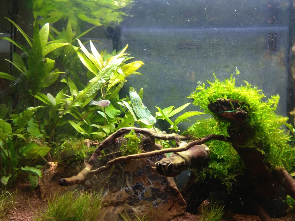 60l biotope asiatique - Page 3 Img_2016