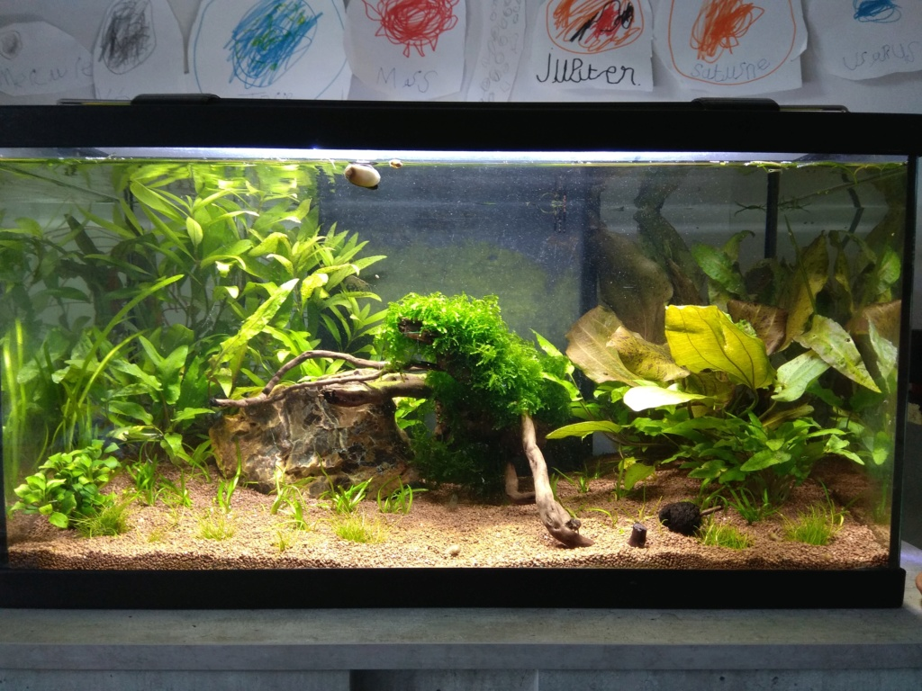 60l biotope asiatique - Page 3 Img_2019