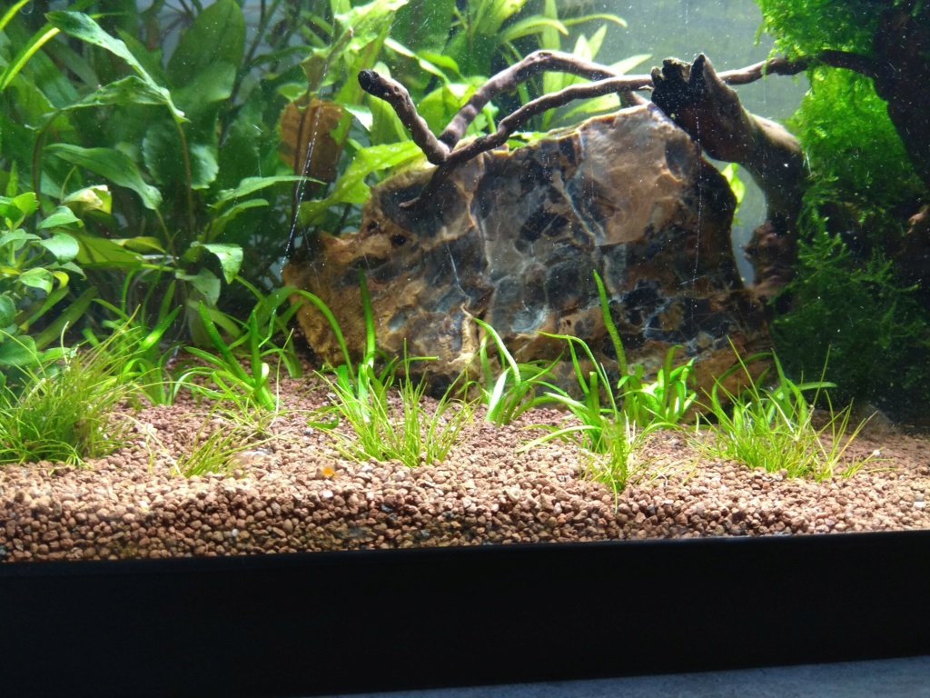 60l biotope asiatique - Page 3 Img_2020