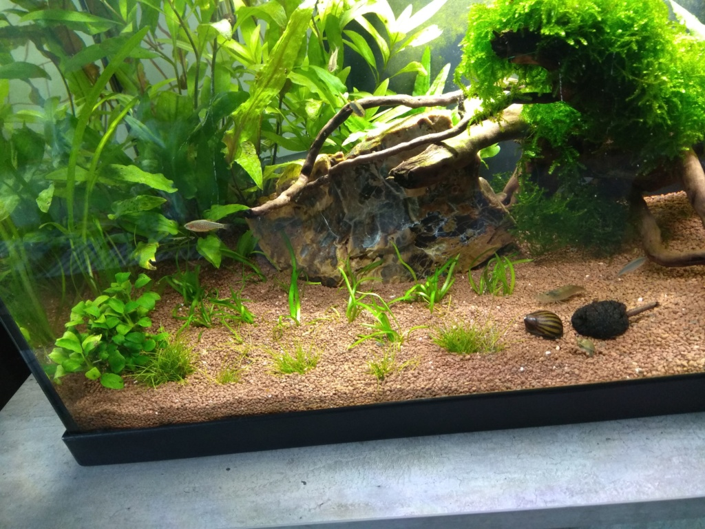 60l biotope asiatique - Page 3 Img_2021