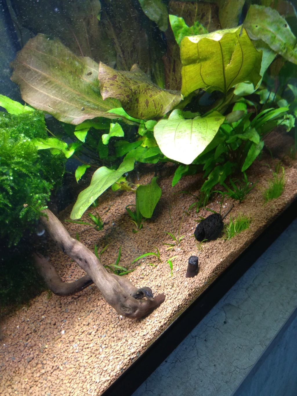 60l biotope asiatique - Page 3 Img_2023
