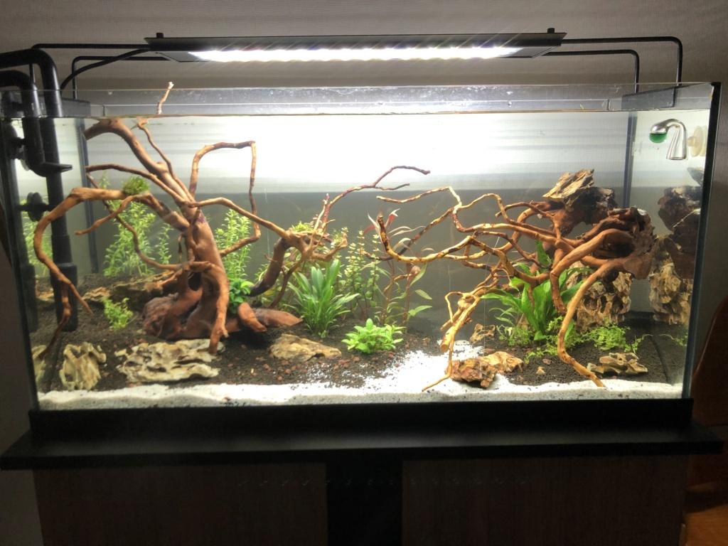 Refonte aquarium Aquari10