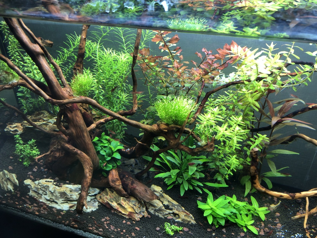 Refonte aquarium Aquari12
