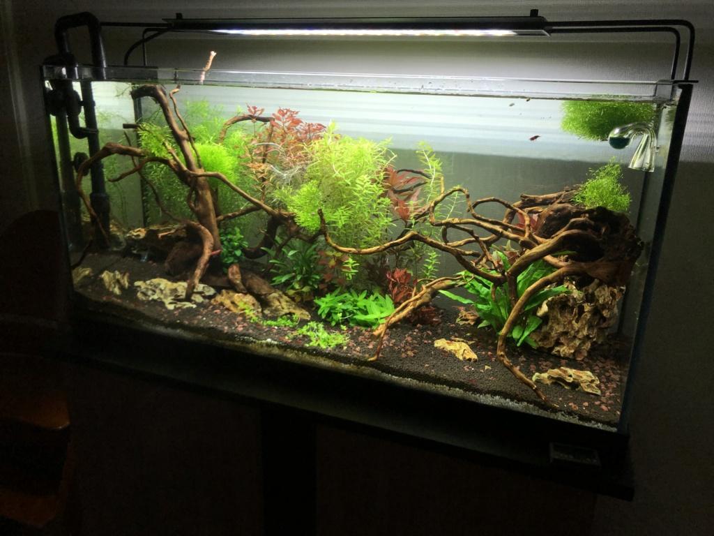 Refonte aquarium Aquari13