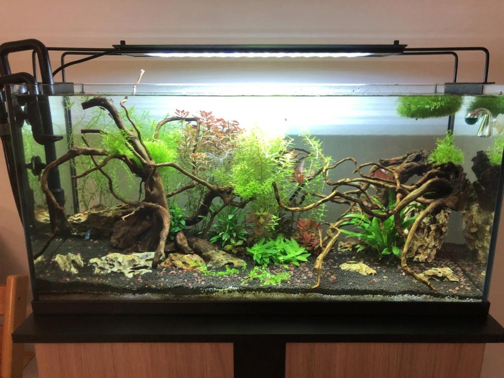 Refonte aquarium Aquari15