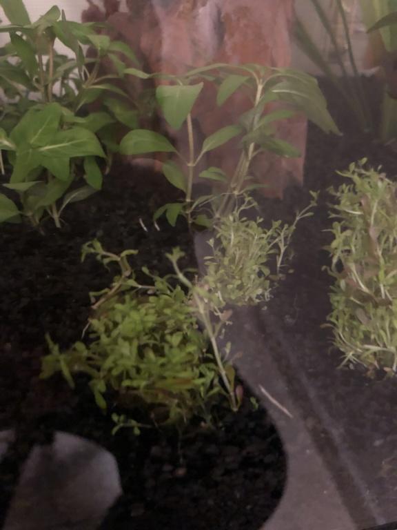 Quelle est cette plante ? Img_8810