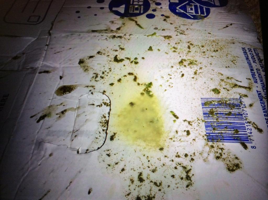 Chipie est malade. Diarrhées très liquides et verdâtres... Image11