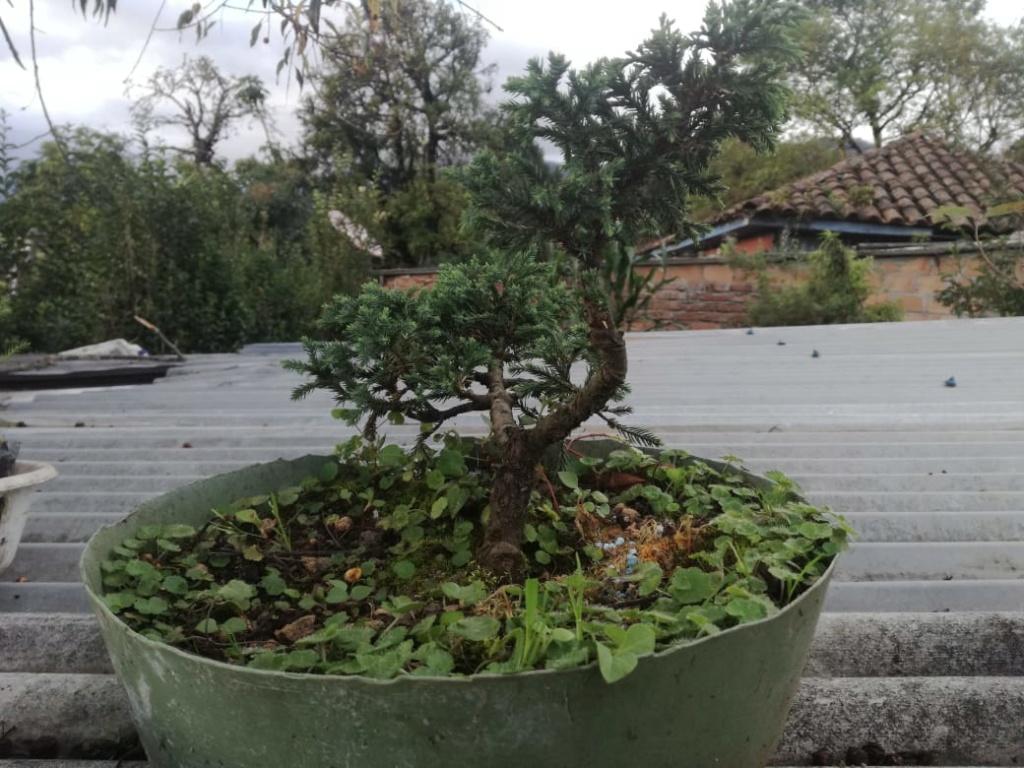 AYUDA CONSEJOS Planta10