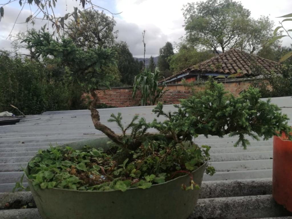 AYUDA CONSEJOS Planta11